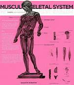 musculoskeletal_system
